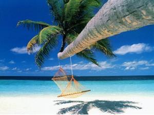 summer-coconut-tree-nature